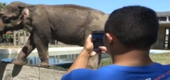 Único zoológico carioca foi fechado para o público