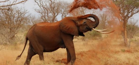 Cria de elefante salva-se graças a um cão