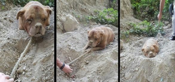 Cadela foi enterrada viva e já estava sem forças