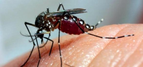 Veículos internacionais estão temerosos com o zika