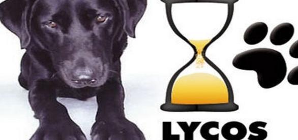 Lycos sur le retour .. gagnant ?