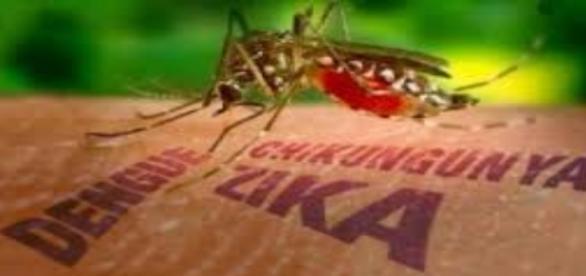 Zika: vacina está sendo estudada (Foto:Reprodução)