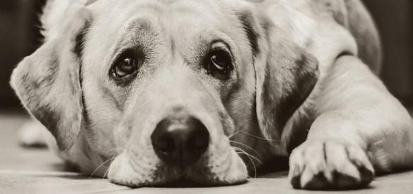 Procura-se Cachorro: Inovação na Busca de Cães