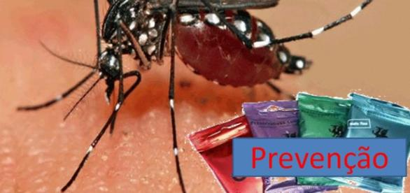 O aedes aegypti, transmissor do zica vírus