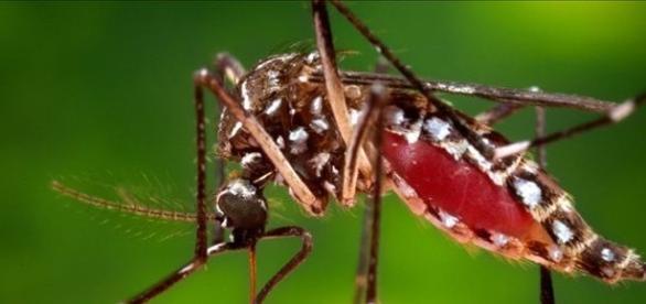 de: http://www.10tv.com/ ,mosquito Aedes