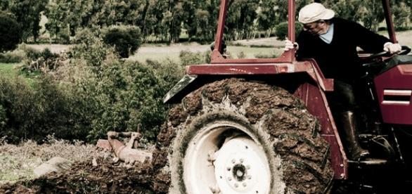 El sector de la agricultura crece en España.