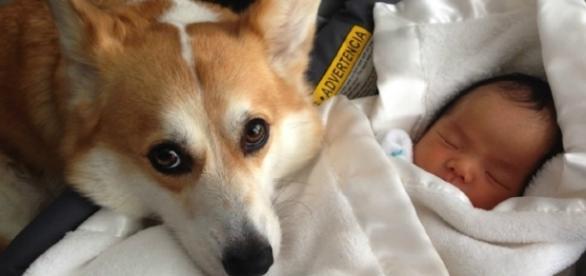 8 coisas que seu cachorro faz muito melhor do que você