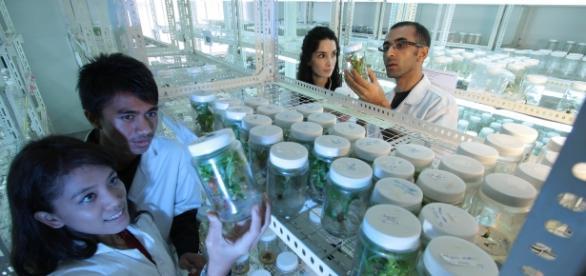 Cientistas fabricam produtos alimentícios em laboratório.