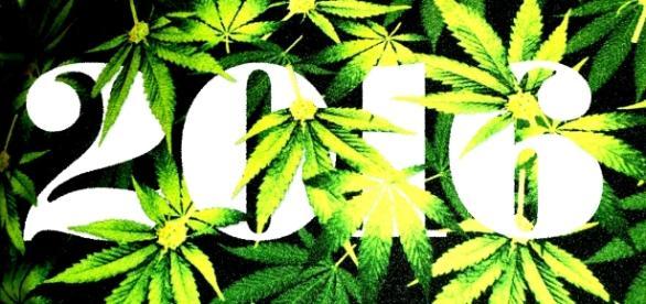 Da palermo il primo passo per la legalizzazione