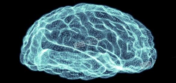 Unser Gehirn. Das Schöpfungssystem der menschlichen Welt.