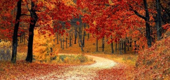 Fall is so beautiful. pixabay.com