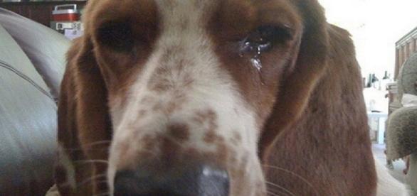 Cão é abusado pelo próprio dono - Foto/Reprodução