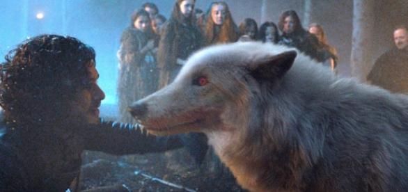 Game of Thrones se despedirá de mais um lobo