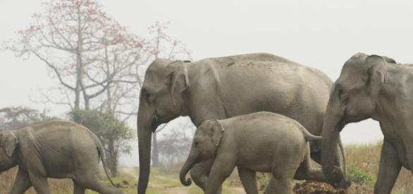 WWF - worldwildlife.org Des éléphants vivants, nettement mieux