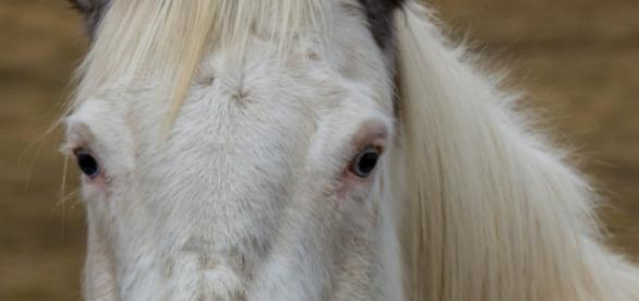 Protect the horse from West Nile virus by https://morguefile.com/creative/ranbud;