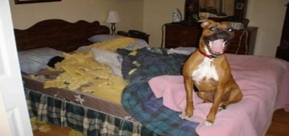 Cachorros que são verdadeiros decoradores de lar