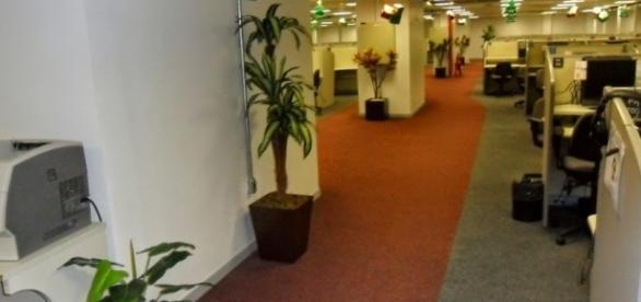 Razões para ter uma planta no ambiente de trabalho - Florestal ... - florestalbrasil.com