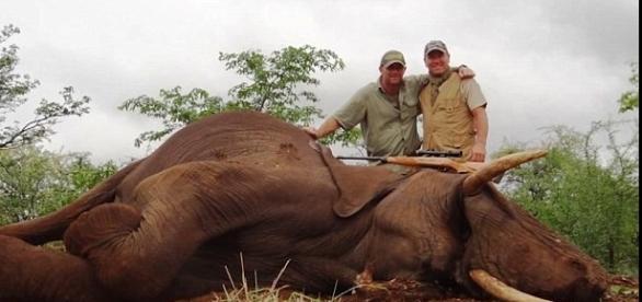 Imagem de elefante abatido por caçadores