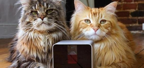 Technology for pets was highlighted in two main startup events last week (Photo via petcube.com)