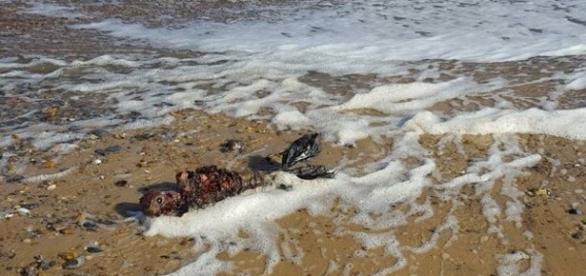 Foto do corpo de uma suposta sereia intriga internautas em todo mundo.