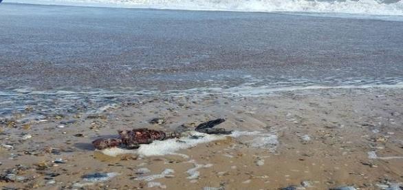 Pretenso cadáver humanoide achado em praia inglesa (Facebook / Paul Jones)
