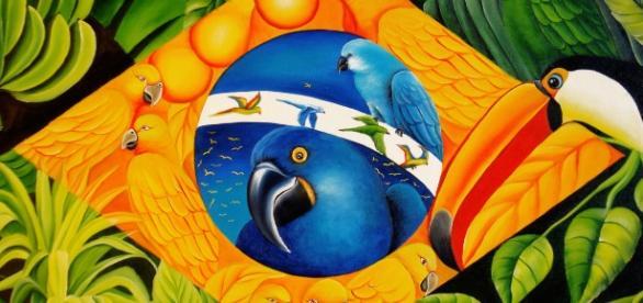 Imagem por Fauna e flora do Brasil