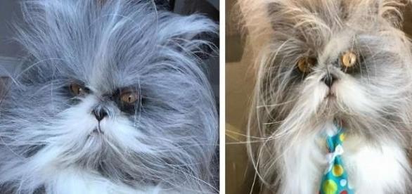 """Animal sofre de síndrome conhecida por """"síndrome do lobisomem""""."""
