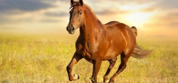 Frankel é um cavalo de corrida