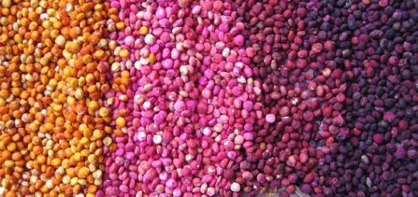 Quinoa, un pseudo cereal ideal para todos