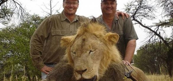 Minnesota dentist who killed Cecil the lion gets mauled on the ... - pri.org