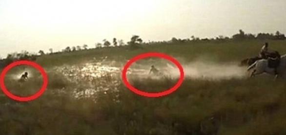 Turistas estavam andando a cavalo em safári