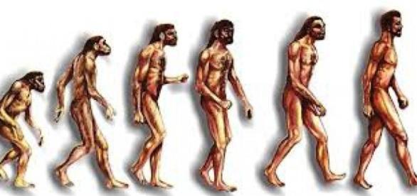 La evolución humana a través de llos tiempos