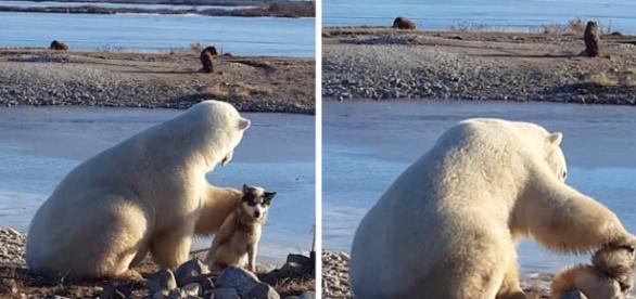 Momento de ternura entre o urso e o cão