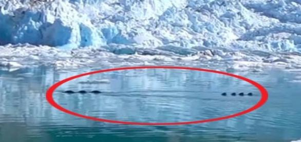 Monstrengo surgiu próximo às geleiras do Alasca (HIRDPHASEOFTHEMOON)