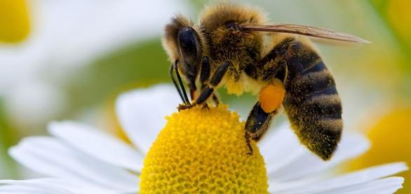 As abelhas estão desaparecendo