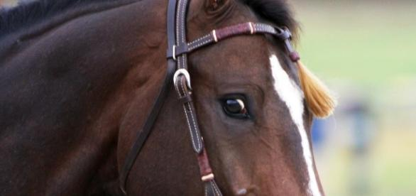 A Massive, Prized Show Horse Was Murdered and Butchered for Its ... - vice.com