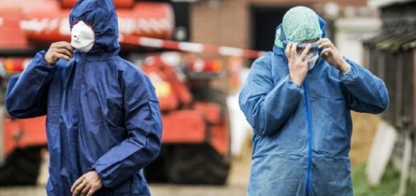 DSVSA a confirmat prezența gripei aviare de tip H5N8 în România