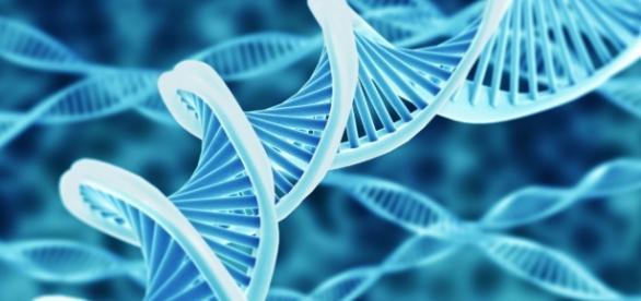 El ADN recoge y codifica todo el patrimonio genético de un organismo
