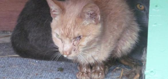 The Great Outdoors? Not for Cats! | Feral Cats | Companion Animal ... - peta.org