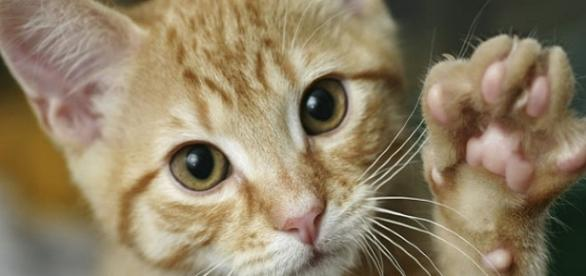 Gatos eram utilizados na culinária ainda vivos (Foto: Reprodução/Ilustrativa)