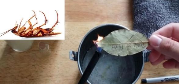 Acabe com as baratas de modo natural, sem venenos! -- Imagem: Youtube/Noah