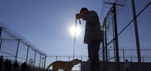 Puppy training: Future service dogs head to maximum-security ... - nbcnews.com