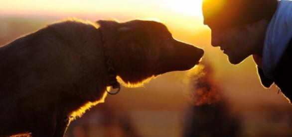 A sintonia entre o homem e o seu melhor amigo pode fazer ainda mais sentido (Foto: Divulgação)