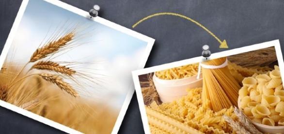 Incentivi per le imprese con contratti in filiera per il grano duro, 15mila euro in tre anni
