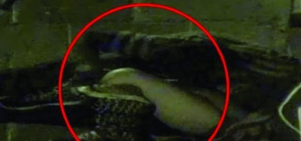 Dois jovens acabaram sendo flagrados por câmeras de segurança enquanto faziam sexo