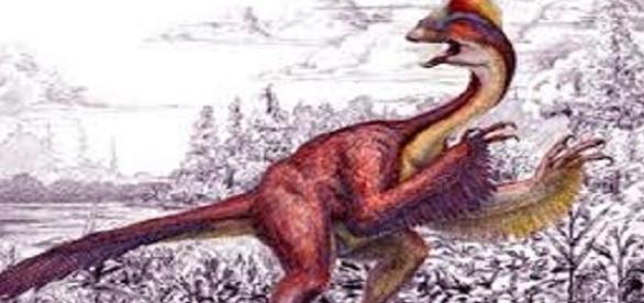 hallan plumas de dinosaurio y se c