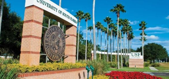 Study at INTO University of South Florida - intostudy.com