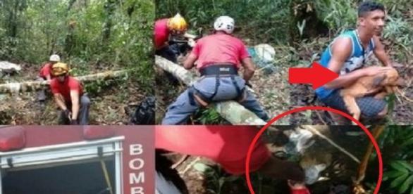 Bombeiros salvam cachorro que caiu em poço - Google