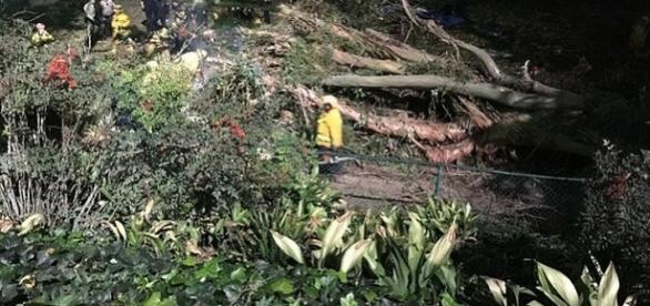Un copac s-a prăbușit peste un grup de nuntași în California - Foto: Departamentul de poliție din orașul Whittier