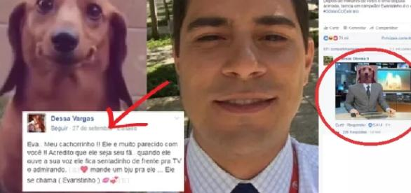 Cachorrinho ganha concurso de sósias de Evaristo Costa